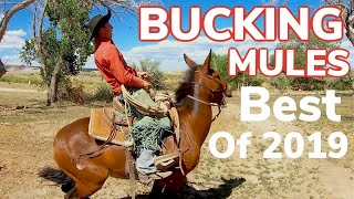 The Best of 2019: Bucking Mules, Wild Cattle and Fast Horses