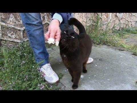 Black cat rubbing to me so cute