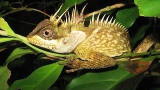 163 новых вида животных и растений нашли в районе реки Меконг (новости)