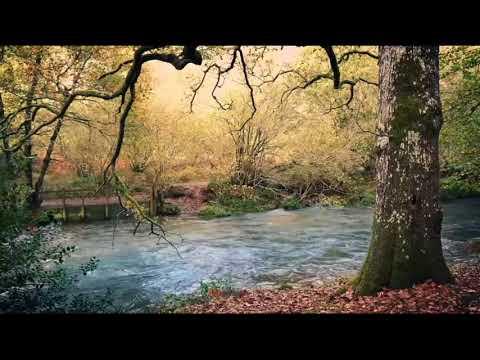 Antonio Vivaldi - Spring | Four Seasons