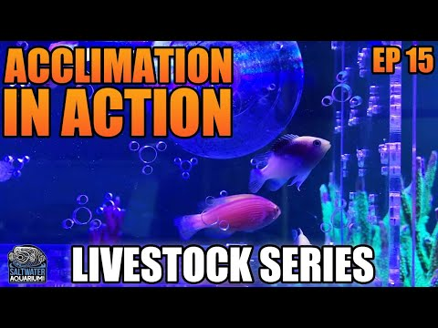 Fish & Coral ACCLIMATION In Action! - Livestock Series