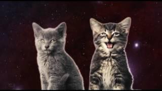 Поющие  коты 🐱🐱