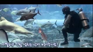 SEA LIFE 부산아쿠아리움 상상초월 상어 피딩 타임