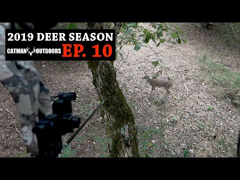 White Oak LOADED With Acorns And Deer Sign - 2019 Deer Season, Ep. 10