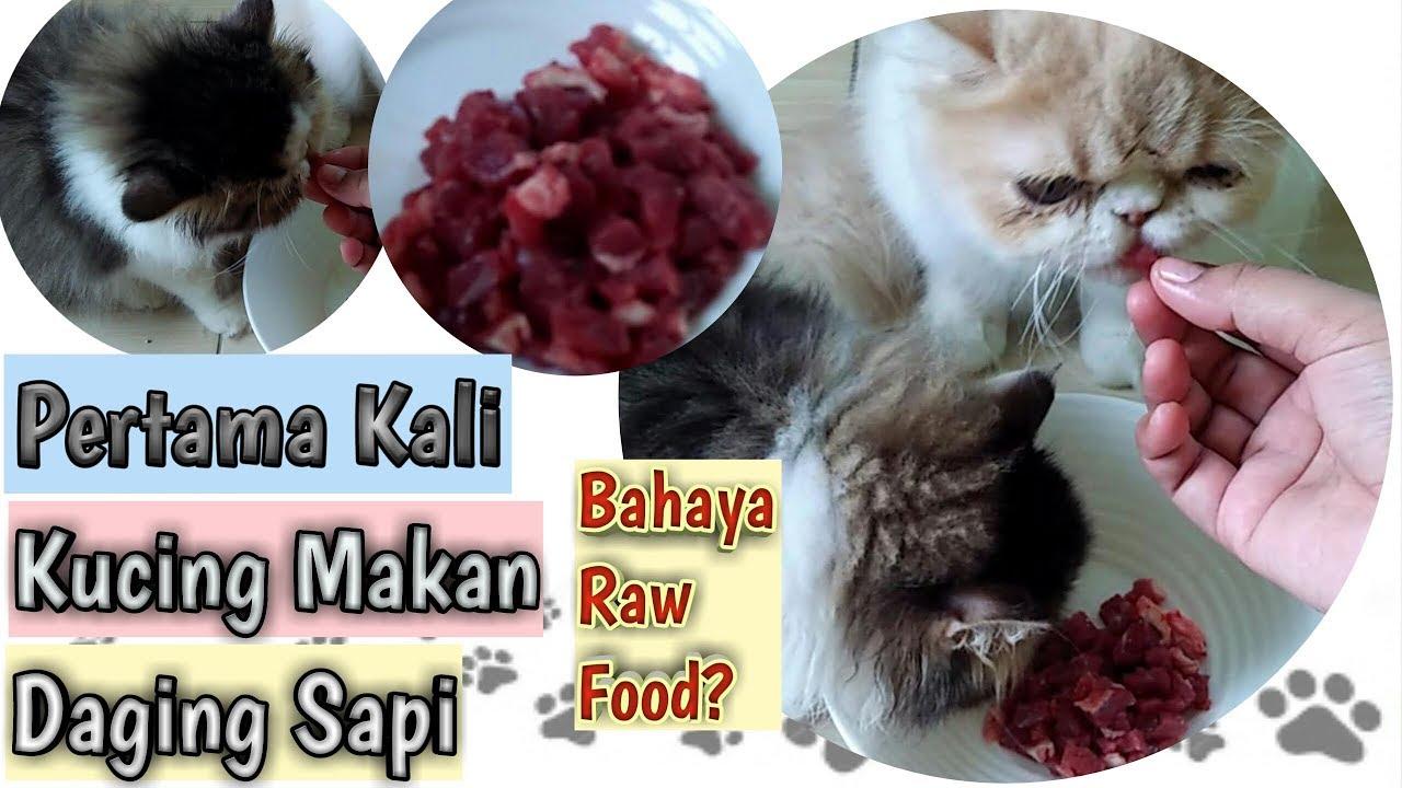 Kucing Makan Daging Mentah Atau Raw Food Makanan Kitten Biar Gemuk Youtube