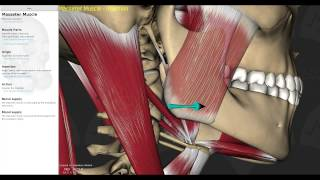 Muscles of Mastication Smart Lecture