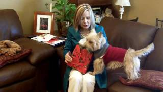 Cairn Terrier - Captain Applejack Snap Valentines Day