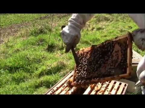 Beekeeping - Your First Spring Inspection !
