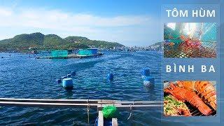 Video Xem cảnh cho Tôm Hùm ăn trong Lồng ở Đảo Bình Ba vịnh Cam Ranh hay cực | ZaiTri download MP3, 3GP, MP4, WEBM, AVI, FLV Oktober 2018