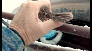 Man Saves Frozen Bird Stuck To Fence