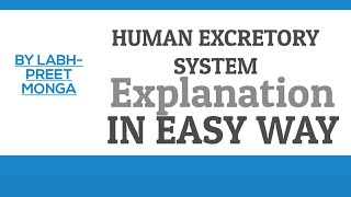 How to draw human excretory system diagram by easy method