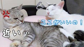 お互い嫌そうなのに一緒に寝る猫たちw