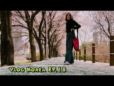 เมษา ซากุระ เกาหลี ทำไมมันดีแบบนี้หละแม่ !!!!!!! | Vlog Korea EP.18