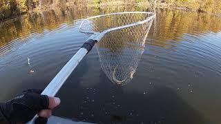 Рыбалка на судака осенью основные приманки и цвета