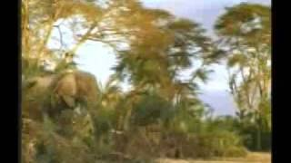 HAYVANLAR ALEMİ -  Filler - Belgesel