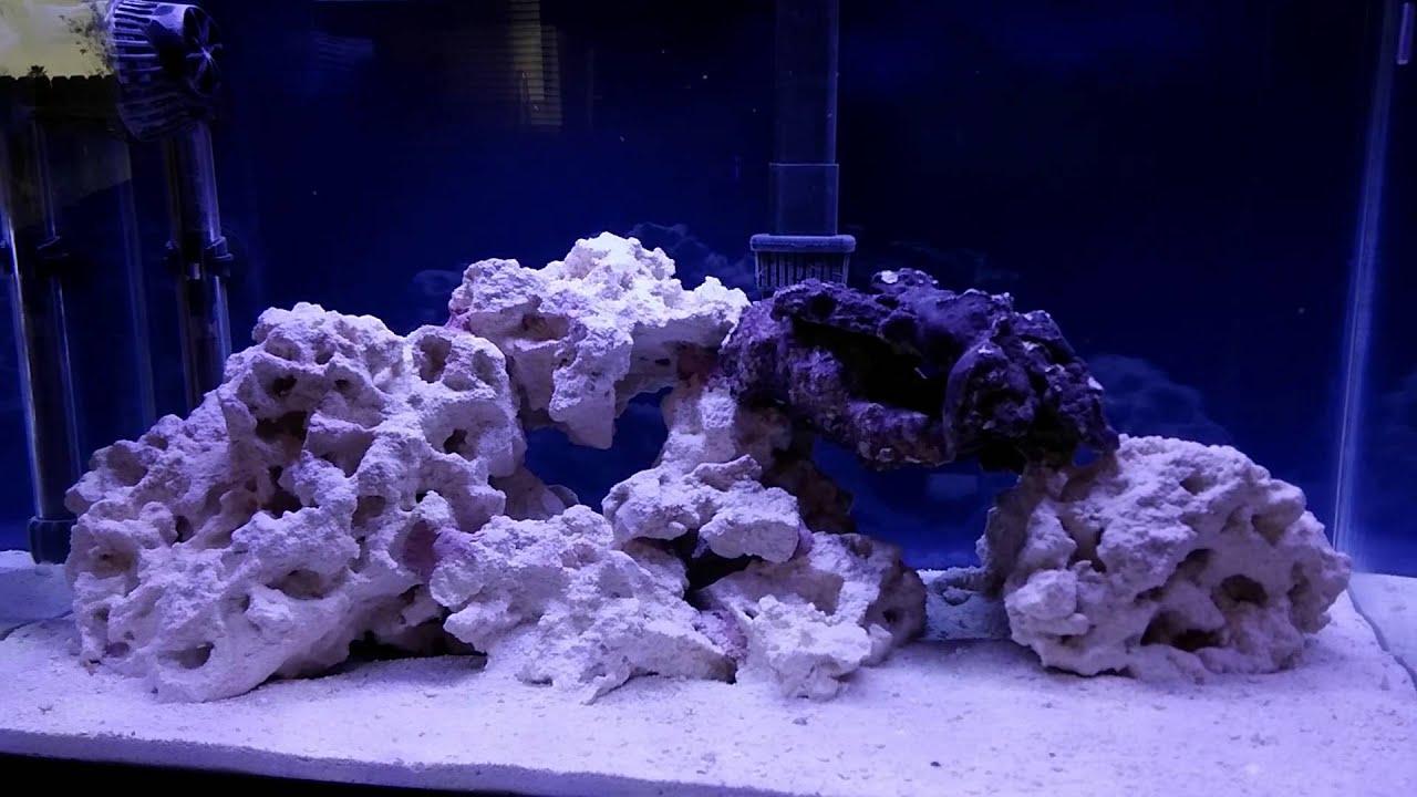 How to setup a Nano 10 gallon reef tank day 14 cycle plete