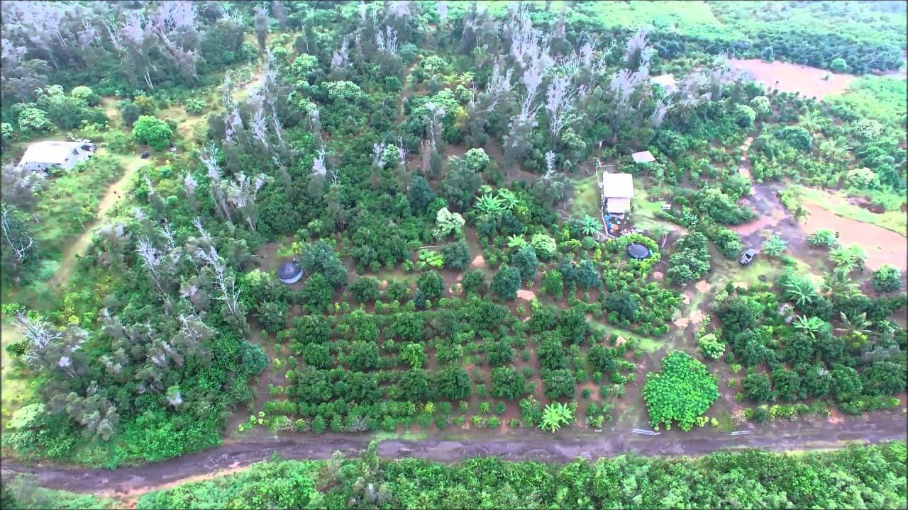 Aboud Family Coffee Macadamia Nut Farm On The Big Island Of Hawaii Youtube