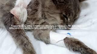 Спасаем бездомного кота с абсцессом