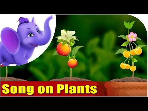 Song on Plants - Five Main Parts of a Plant in Ultra HD (4K)