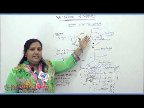 Nutrition in Animals Part 1 Biology Pre foundation Std 7th video lecture