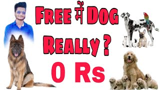 Free Dog ? Reality is Here ..Watch this before Adopting A new Dog
