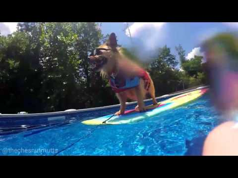 Surfing Dog Jada