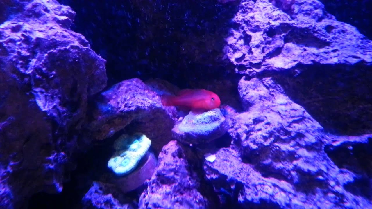 Red Sea C 130d 34 Gallon Reef With Radion Xr30