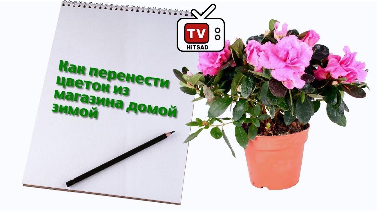 ДЕСЕРТ ЦВЕТЫ В ГОРШОЧКЕ ✶рецепт✶ - YouTube