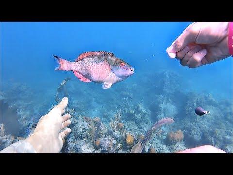 Underwater Fishing!! Handlining Tropical Fish! (Coral Reef)