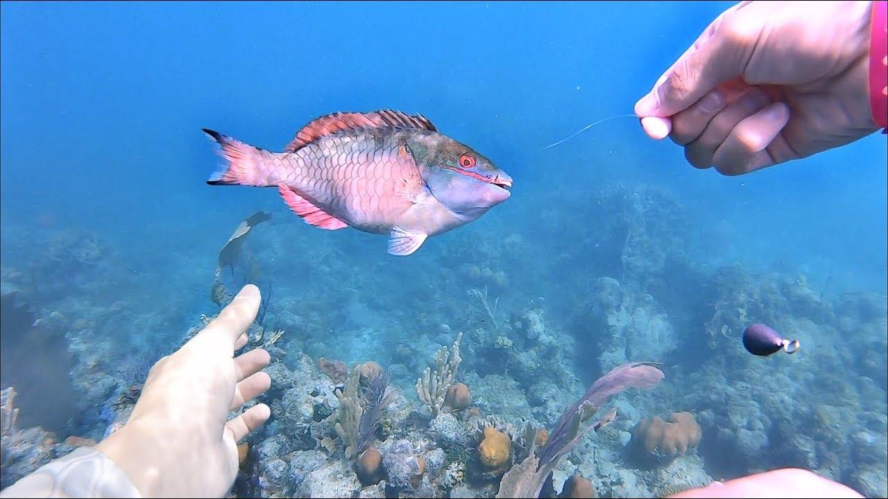 Underwater Fishing Handlining Tropical Fish Coral Reef