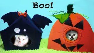 Хеллоуинские ДОМИКИ для КОТОВ Своими Руками Лиза и котики LizaTube
