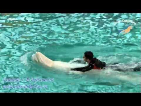 Плавание с дельфинами в Санкт-Петербурге.mp4