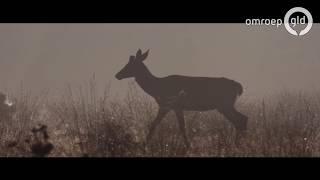 De natuurfilm 'Wild'   UIT met Esther