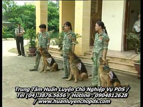Trung tâm PDS- chó nghiệp vụ kiểm lâm