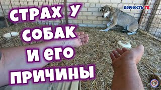 Страх у собак и его причины | Fear in dogs and its causes