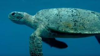 Feeding the Ocean - Turtle