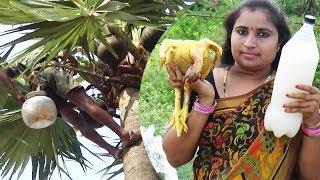 Toddy Palm Neera Wine SAP Liquor Chicken Curry Cooking In My Village | THAATI KALLU Chicken Recipe