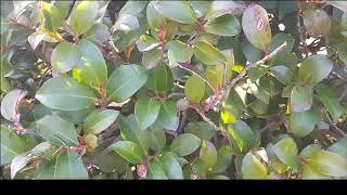 """[식물]  """"목본류(50종)의 겨울나기&quo…"""