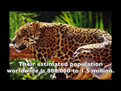 Deforestation Devastation