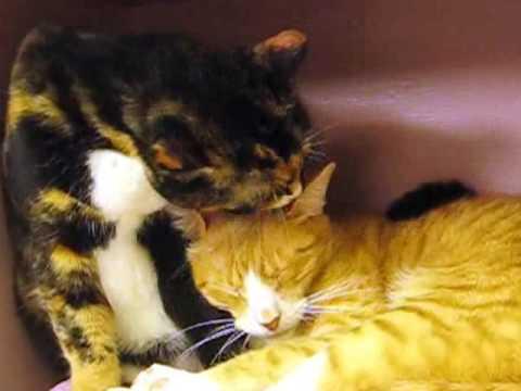 emergency cat care Seattle