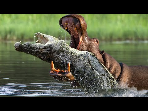 8 Animals That Absolutely HATE Each Other!