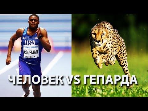 Как человек может обогнать гепарда? Мы рождены, чтобы бегать!
