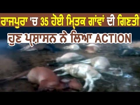 Exclusive: Rajpura में 35 Cows की मौत के बाद अब Action में आया प्रशासन