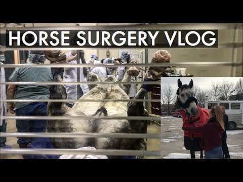 MY HORSE GETS SURGERY! // PART 1
