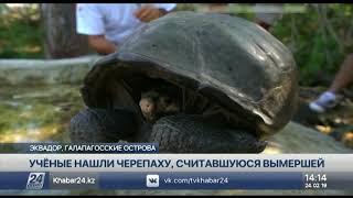 Найдена черепаха, вид которой считали вымершим более 100 лет назад