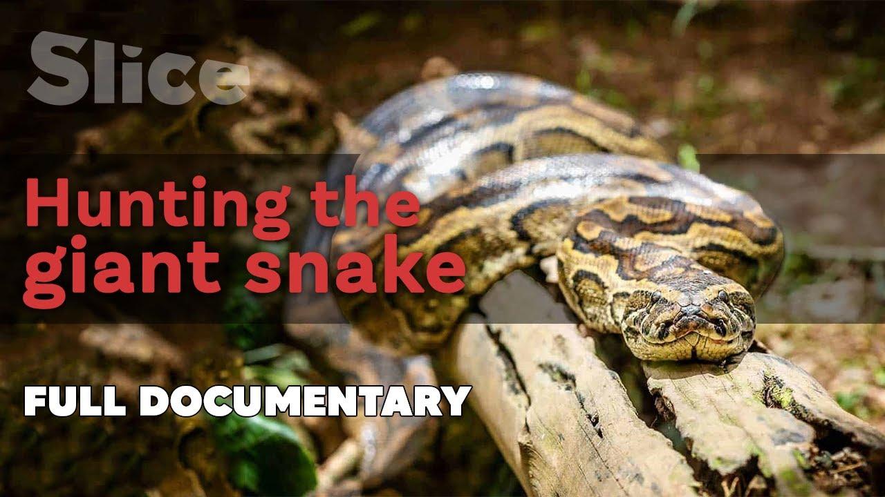 Download Hunting the giant snake   SLICE I Full documentary