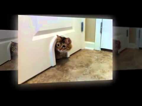 Good CatHole Door|CatHole Door Review