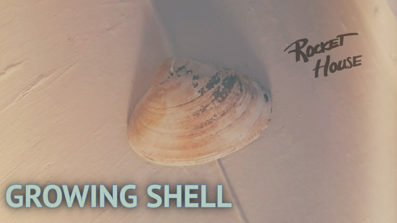Growing Shell - Rocket House [Live Session]