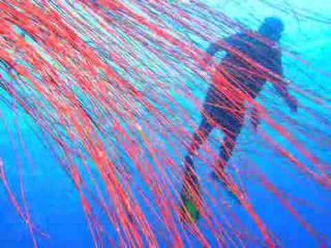 Palau Tours DISCOVER PALAU MICRONESIA