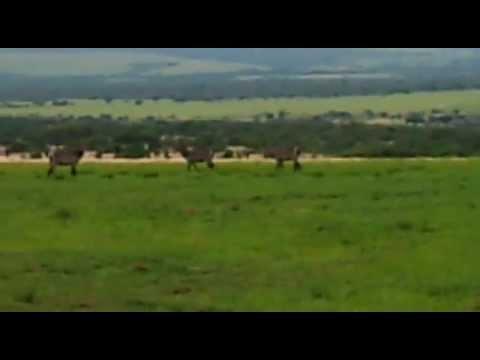 Hunting Waterbuck kill shot south africa